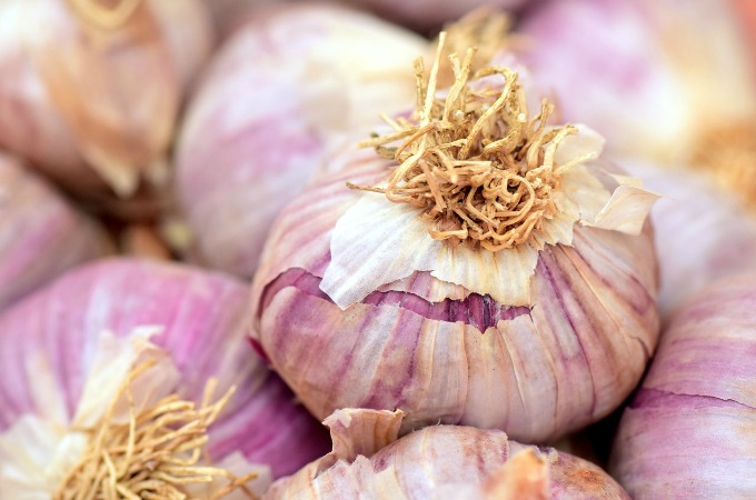garden jobs in July what to sow in july lift garlic