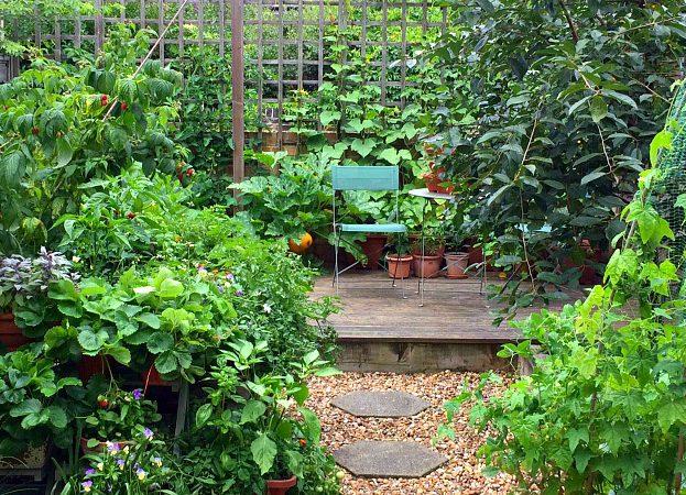 August kitchen garden diary 2017 Golightly Gardens Penny Golightly