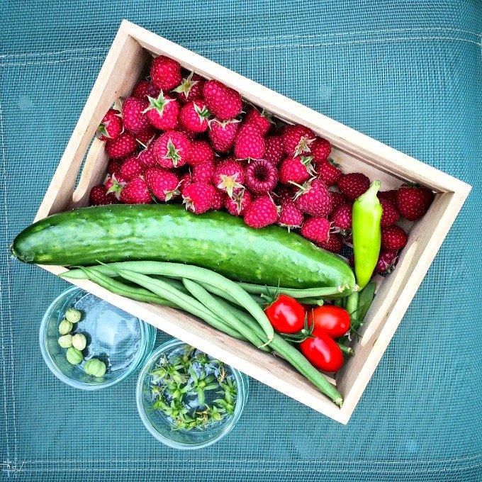 Kitchen Garden allotment pickings August 2017
