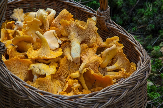 British seasonal food in October wild mushrooms