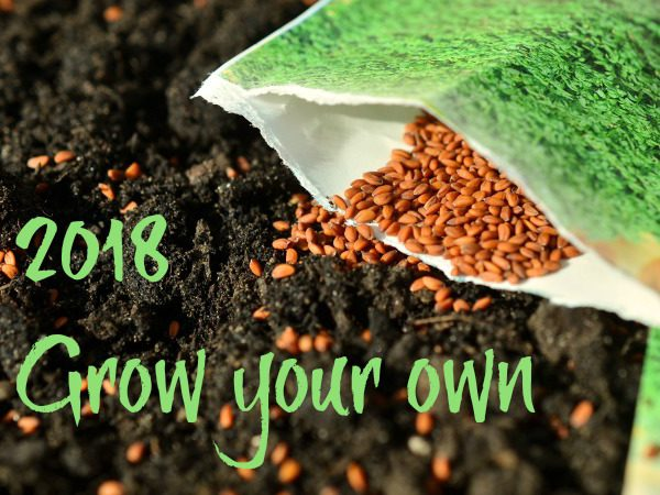 Seeds to sow in January and garden jobs to do this month