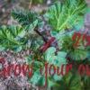 What to sow in February garden jobs this month kitchen garden allotment
